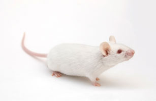 Growing selection of recombinant mouse proteins