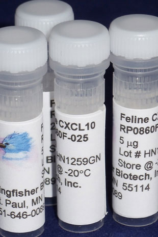 Feline CXCL10 (IP-10) Recombinant Protein - 5 micrograms