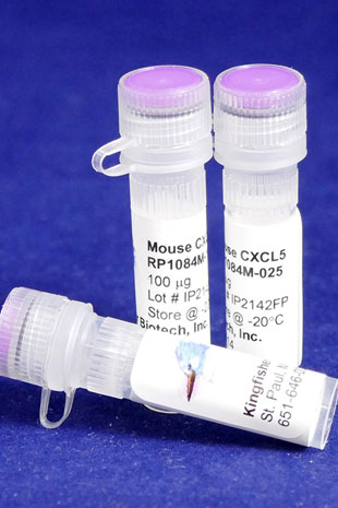 Mouse CXCL5 (ENA-78) (Yeast-derived Recombinant Protein) - 100 micrograms